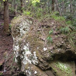 岩の左上に地蔵菩薩の顔が彫られているそうで...